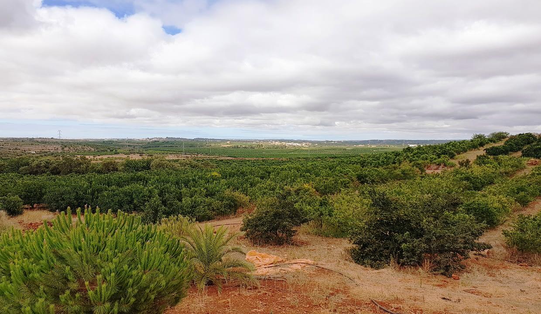 Tripalgarve immobilier albufeira algarve portugal TARY0003F_20200821_104734