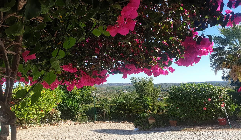 Tripalgarve immobilier albufeira algarve portugal TARY0003F_20200821_180323