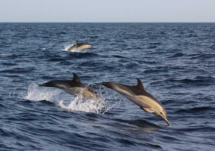 tripalgarve immobilier portugal algarve albufeira Excursions en bateau en Algarve